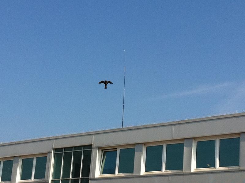 Hawk Kite Bird Scarer Spares Enviroguard
