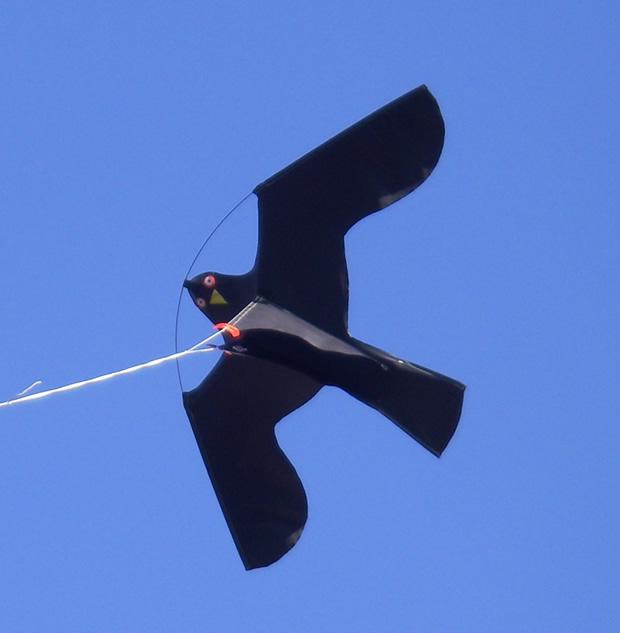 Best Kite Design For Flying