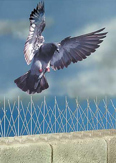 bird control lancashire